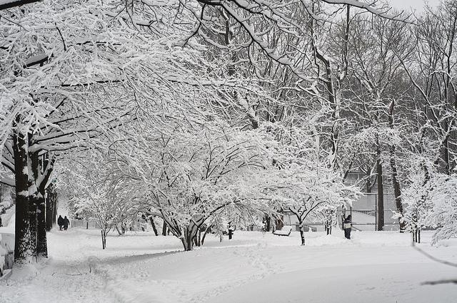 After the 2010 blizzard in Van Cortlandt Park in the Bronx